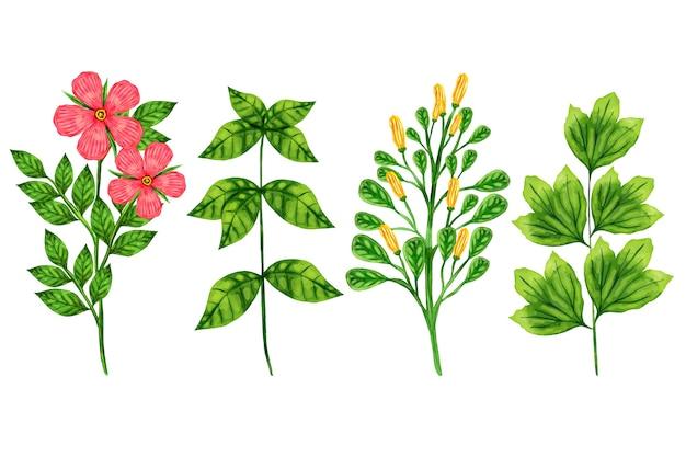 Разноцветные ботанические травы и полевые цветы