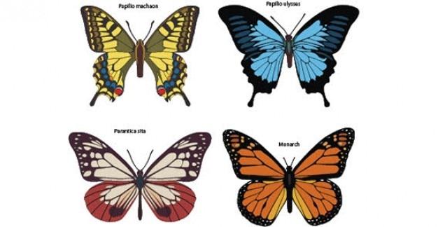 カラフルな蝶自由ベクトル