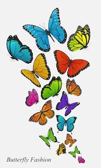 Colorful butterflies isolated on grey