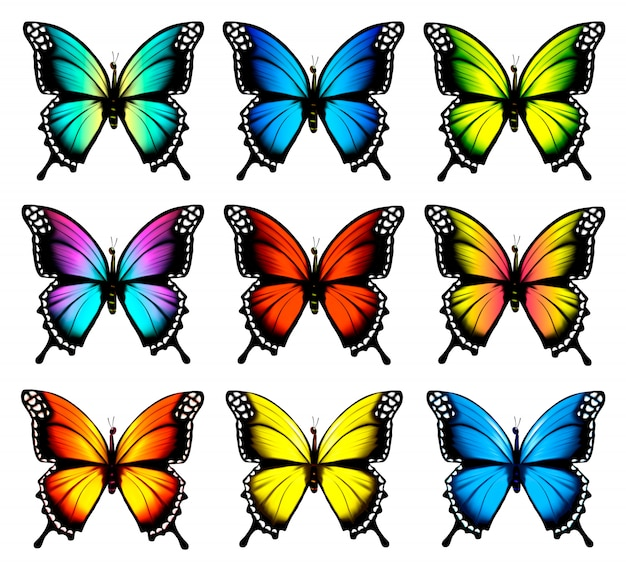 Colorful butterflies set. . Premium Vector