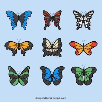 Collezione di farfalle colorato