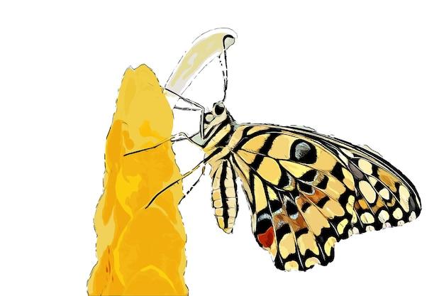 カラフルな蝶の水彩画