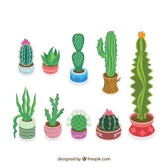 Colorful cactus collection