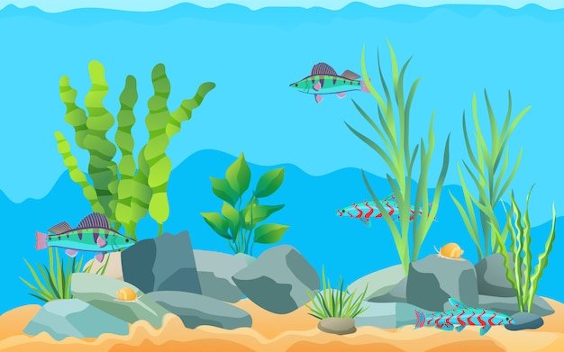 Colorful cartoon aquarium fishes