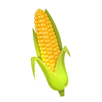 Colorful cartoon illustration of corn