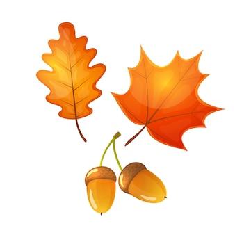 Colorful cartoon illustration of an oak and a maple leaf, acorn.