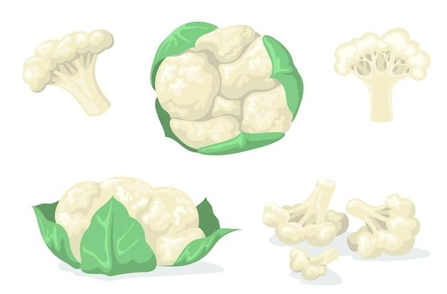 웹 디자인을위한 다채로운 콜리 플라워 플랫 세트입니다. 잎에 만화 양배추와 조각 격리 된 벡터 일러스트 컬렉션으로 나뉩니다. 유기농 식품 및 야채 개념