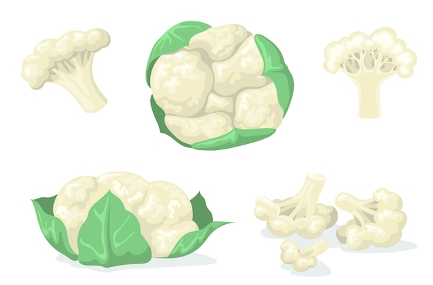 Colorful cauliflower flat set for web design. cartoon cabbage in leaves and divided into pieces isolated vector illustration collection. organic food and vegetables concept