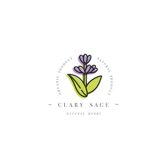 Colorful design template logo and emblem healthy herb- clary sage. logo in trendy linear style isolated on white background.