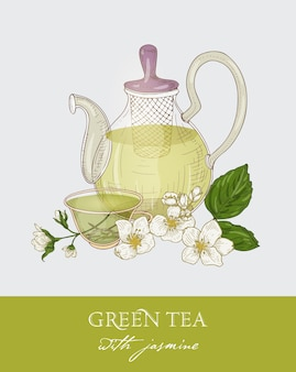 Colorful drawing of glass teapot with strainer, cup of green tea, jasmine leaves and flowers on gray