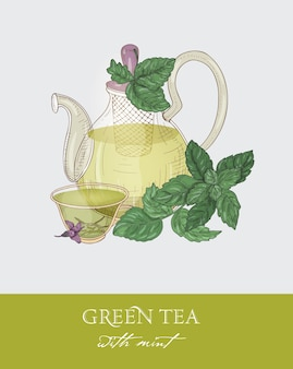 Colorful drawing of glass teapot with strainer, cup of green tea, organic mint leaves and flowers on gray.