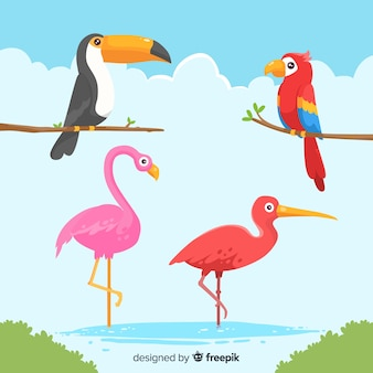 Colorful exotic bird collection flat design