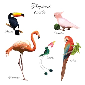白のさまざまな美しい熱帯の鳥とカラフルなエキゾチックな動物相のイラスト