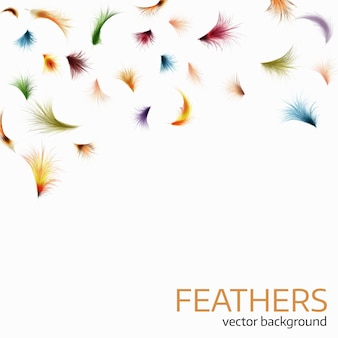 Colorful exotic feathers on white background