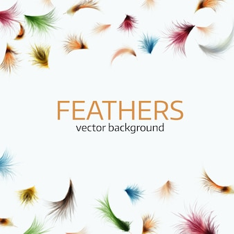 Colorful exotic feathers