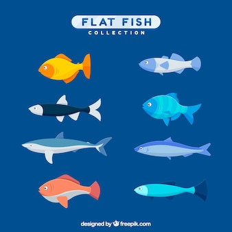 Colorful fishes collection in flat style
