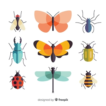 Colorful flat insects pack