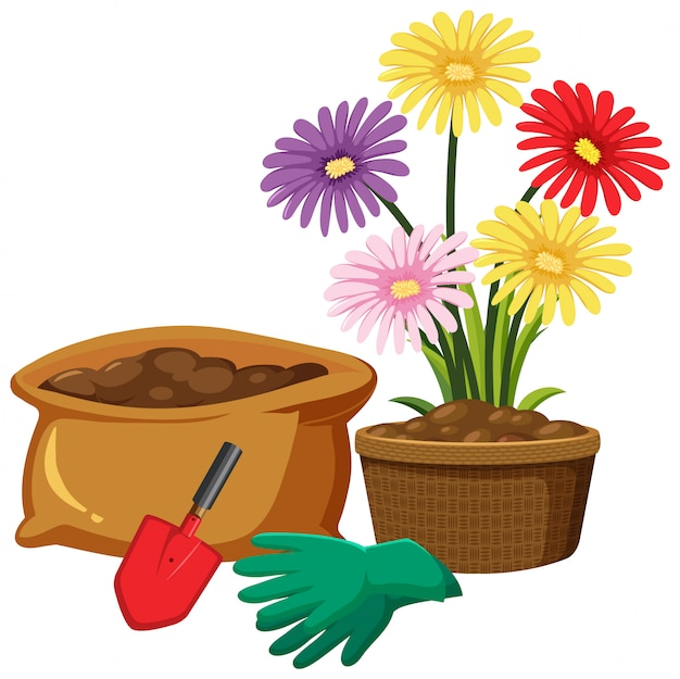 Colorful flowers in clay pot on white background