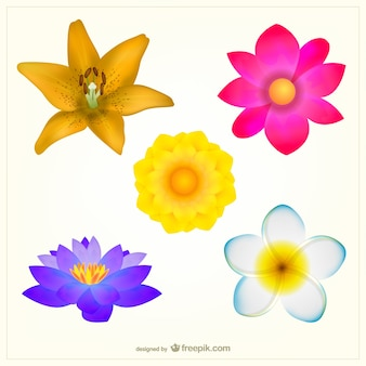 色とりどりの花パック