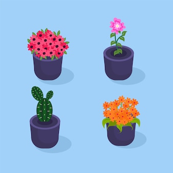 Colorful flowers in pot collection