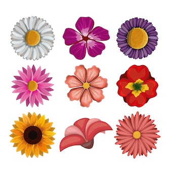 Colorful flowers set in white background