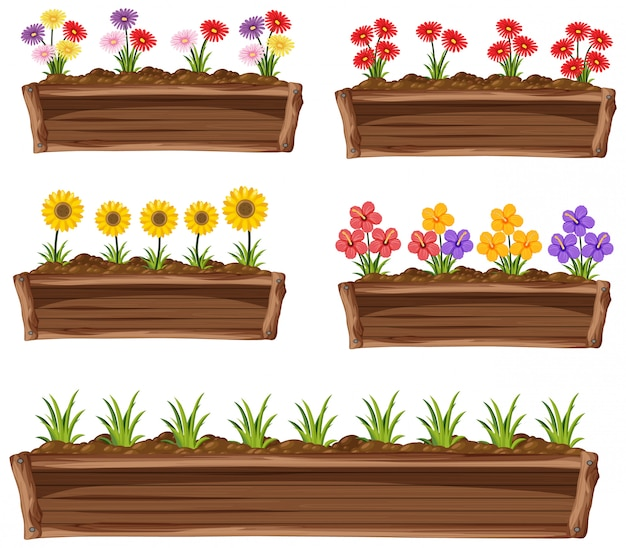 Colorful flowers in wooden pot on white background