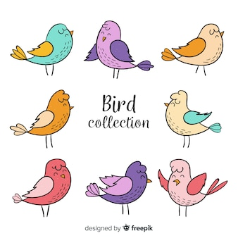 Colorful hand drawn bird collection