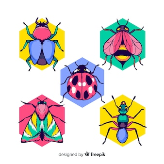 Colorful hand drawn insects pack