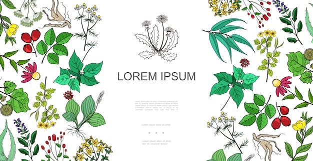 Colorful healthy plants background with drug and medicinal herbs in hand drawn style illustration