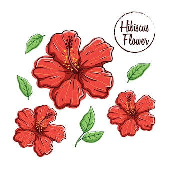 Colorful hibiscus flower with hand draw style