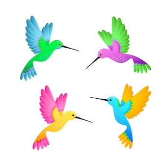 Colorful hummingbird set