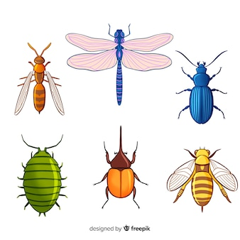 Colorful insect collection