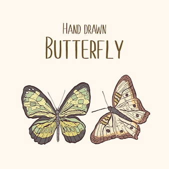 Colorful insect illustration with hand drawn butterfly
