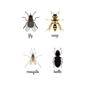 Colorful insects icons set with names