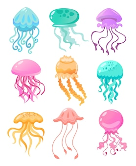 Colorful jellyfish of different shapes illustration