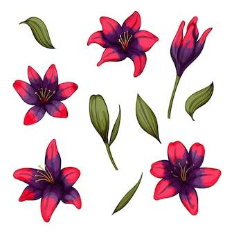 白い背景の上のユリの花のカラフルな、あなたのデザインの咲く花のセット。