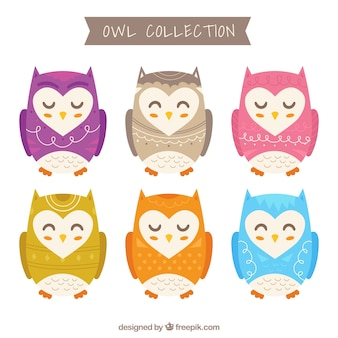 Colorful owl pack
