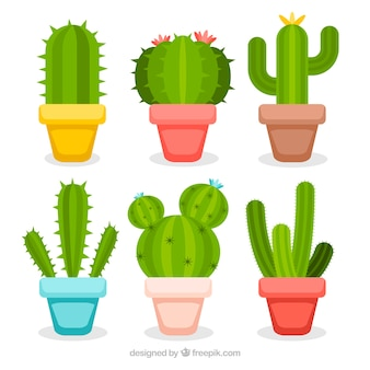 Colorful pack of cactus with flat design
