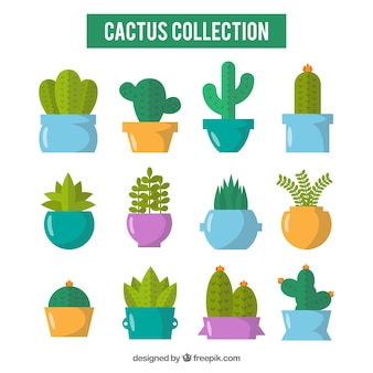 Colorful pack of cactus