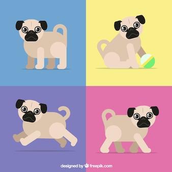 Pacchetto colorato di pugs con disegno piatto