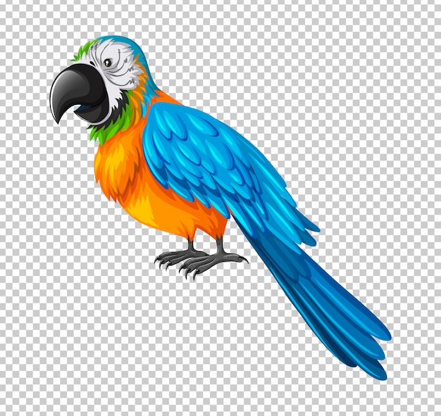 Colorful parrot on transparent