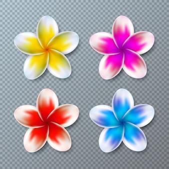 カラフルなプルメリアの花のコレクションが透明に分離