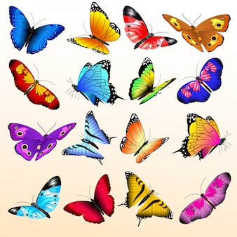 Colorful realistic butterflies big set