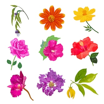 Colorful realistic flower isolated collection set