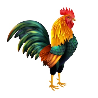 Colorful realistic rooster