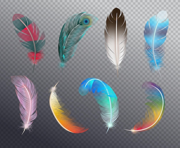 Colorful realistic set of bird feathers painted in different patterns illustration