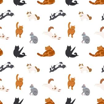 さまざまな品種の猫が白い背景の上で寝たり、歩いたり、洗ったり、ストレッチしたりするカラフルなシームレスパターン