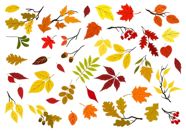 Colorful set of autumn leaves