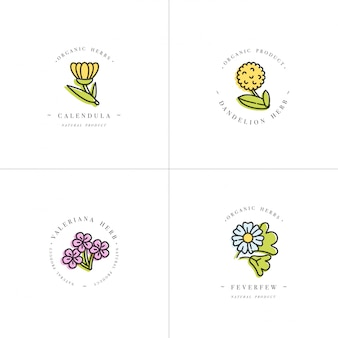 カラフルなセットデザインテンプレート-健康的なハーブとスパイス。異なる薬用、化粧用植物-カレンデュラ、タンポポ、バレリアナ、ナツシロギク。トレンディな直線的なスタイルのロゴ。