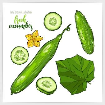 Красочный набор сочных и вкусных огурцов, целых и нарезанных, с листьями. рисованной иллюстрации с заголовком ручной надписи.